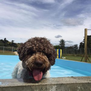 A Dog Enjoying Spring Grove Dog Kennels Swimming Pool
