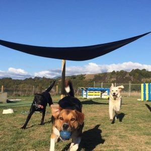 Dogs Enjoying A Ball Game At Spring Grove Dog Kennels