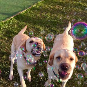 Dogs Enjoying Bubbles At Spring Grove Dog Kennels